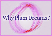Why Plum Dreams?